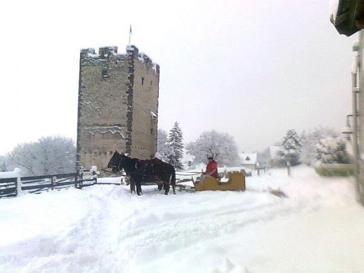 Élő Betlehem hidegvérű lovainkkal